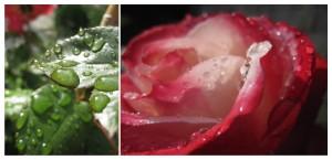 Gartenimpressionen1-1