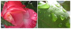 Gartenimpressionen1-2