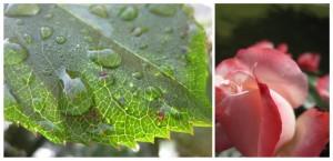 Gartenimpressionen1-3
