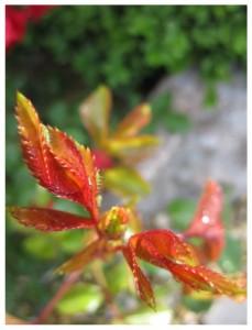 Gartenimpressionen1-5